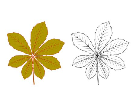 colorful and black and white chestnut leaf isolated on white, vector cartoon image
