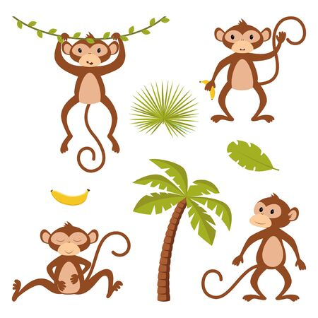 set of monkey with palm tree, liana, banana and exotic leaves isolated on white background, vector illustration