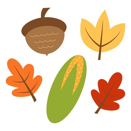 autumn set of colorful oak leaves, acorn and corn isolated on white background, vector illustration
