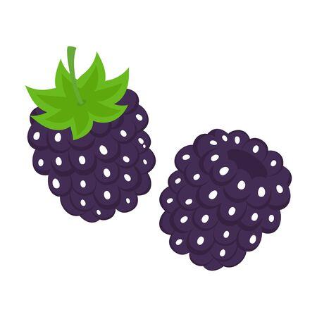 fresh blackberry fruit isolated on white background, summer ripe black berries with green curly stem, vegetarian dessert, vector illustration