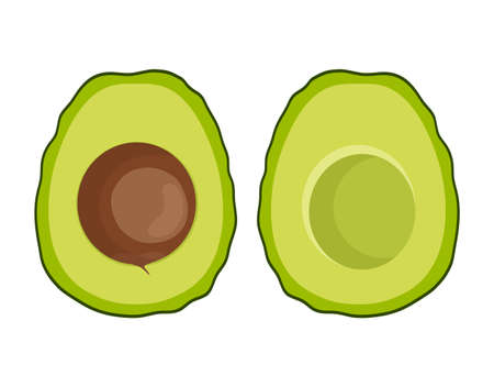 ripe avocado isolated on white background, vector illustration, half of avocado with seed and without