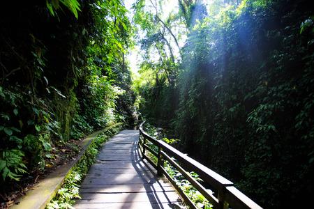 ubud: Monkey Forest Ubud Stock Photo