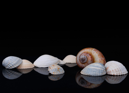 seashells on glossy surface and black background