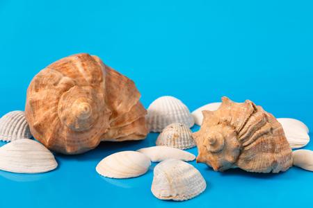 several seashells on blue background