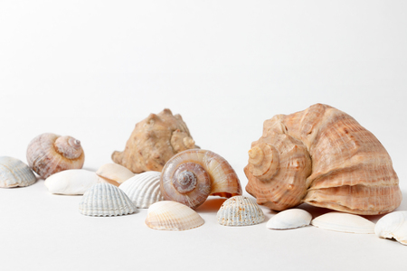several seashells on white background
