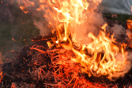 Burning pile of tree limbs and dry leaves in garden