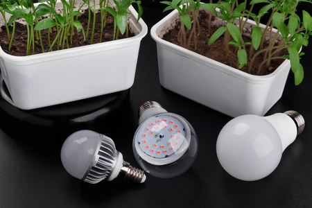 Set with different LED bulbs and growing sprouts. High angle view Foto de archivo