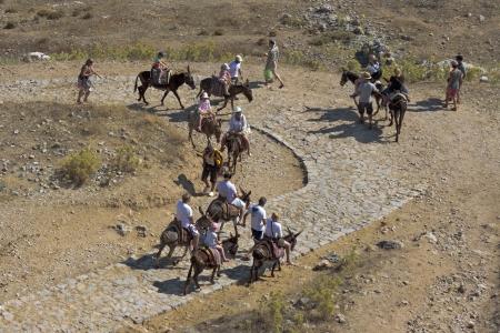 lindos: Donkeys at lindos Stock Photo