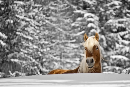 Horse in the snow photo
