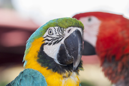 Closeup of a colorful macaw parrot photo