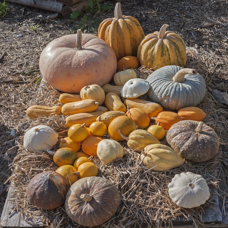 gourds: Colorful variety of gourds and squashes