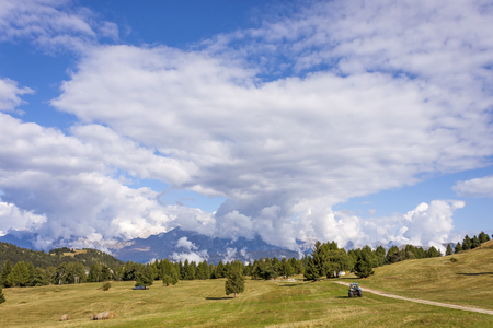monte: The meadows of Viote, on Monte Bondone