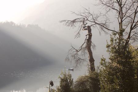 nestled: a mountain lake nestled in the fog