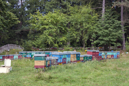 propolis: colored beehives for italian honey