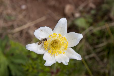Mountain flower Imagens
