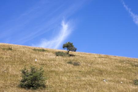 lone  tree: lone tree on a blue background Stock Photo
