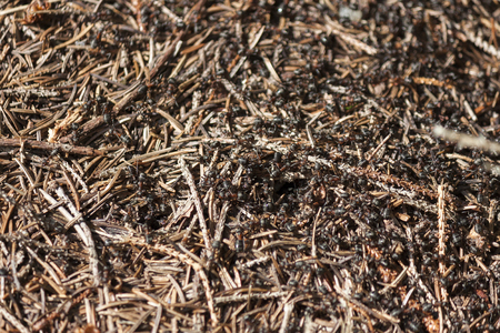 anthill: ants at work in an anthill