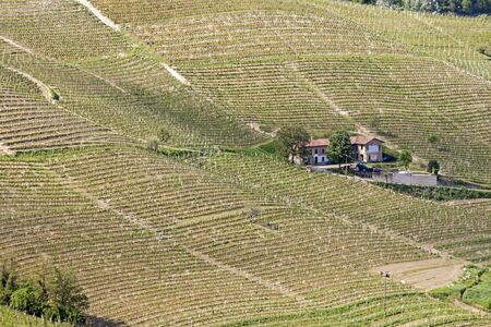 Aerial view of the vineyards of Langhe, Piedmont.
