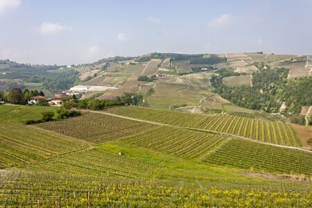 Aerial view of the vineyards of Langhe, Piedmont. Banco de Imagens - 127936582