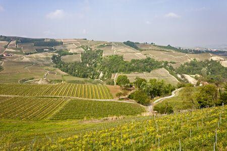 Aerial view of the vineyards of Langhe, Piedmont. Banco de Imagens - 127936577