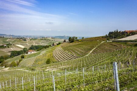 Aerial view of the vineyards of Barbaresco, Piedmont. 版權商用圖片