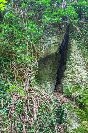 The crack in the rock, deep cleft in the rock and the roots of trees, beautiful background.