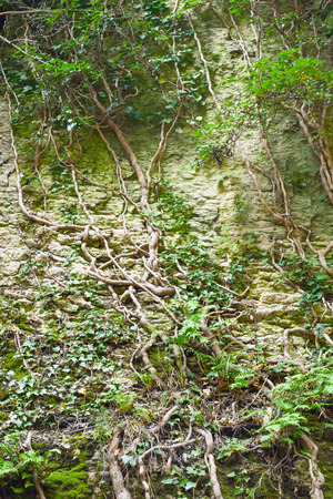 deep roots: The crack in the rock, deep cleft in the rock and the roots of trees, beautiful background.