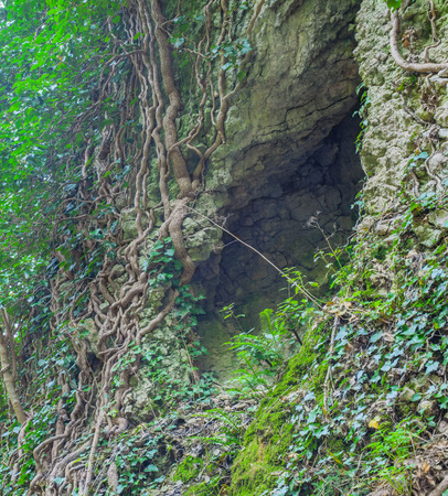 cleft: The crack in the rock, deep cleft in the rock and the roots of trees, beautiful background.