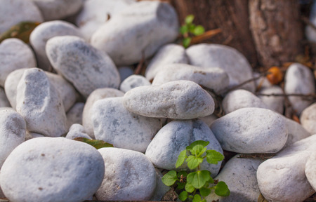 smooth stones: The trunk of an old tree and white smooth stones randomly scattered.