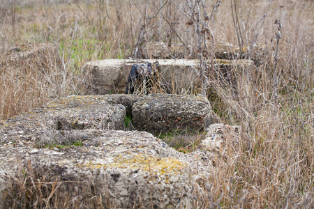 vacant lot: Abandoned concrete squares sticking out of dried grass in a vacant lot.