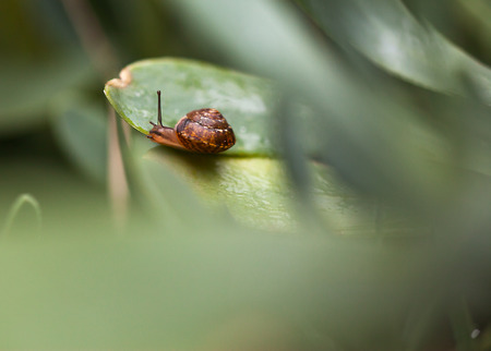 Little snail on the leaf of a plant close-up. Stock Photo