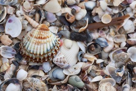 lot of seashells on the beach close-up.