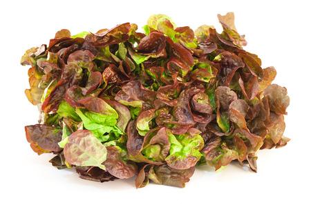 Lettuce isolated on white background close-up. Salad oaklif.