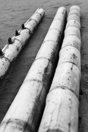 Old bamboo in the sand on the beach close-up.