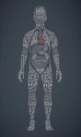 organos internos: cuerpo humano wordcloud ilustración
