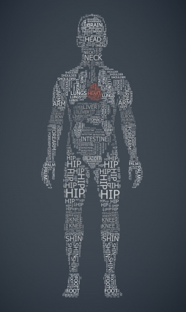 internal organs: human body wordcloud  illustration Illustration
