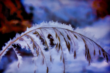 Winter Frosted Grass Imagens