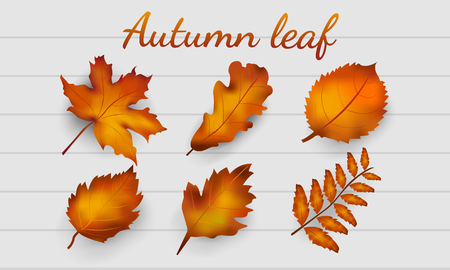 Realistic autumn leaves collection, isolated on white wood background. Autumn season, vector illustration  イラスト・ベクター素材