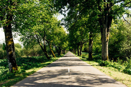 The road passes through an alley of trees