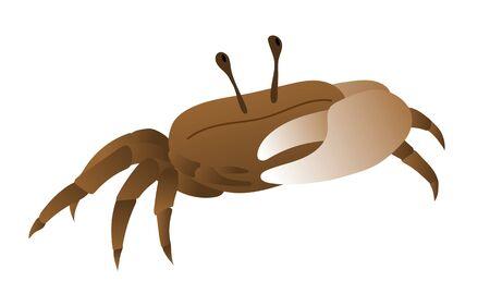 Cute illustration of fiddler crab