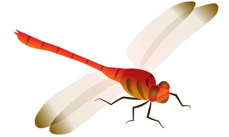 Illustration of dragonfly seen from diagonally above