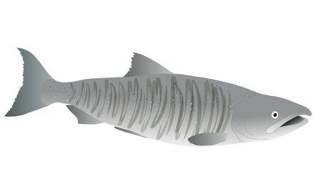 Illustration of a salmon in spawning season Ilustração