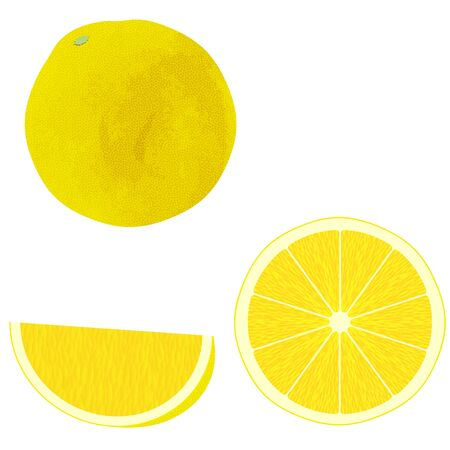 Illustration of 3 Kinds of Grapefruits As Whole and Cut (watercolor style)