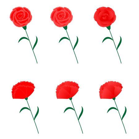 Variation set of carnation illustration