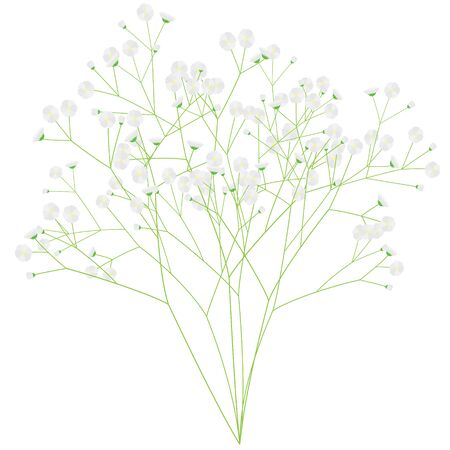 Illustration of a bunch of gypsophila