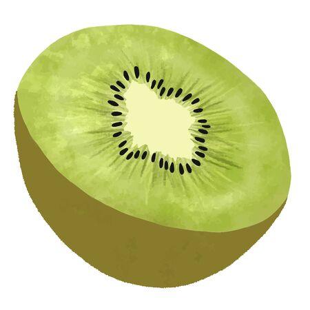 Illustration of kiwi fruit cut in half Vectores