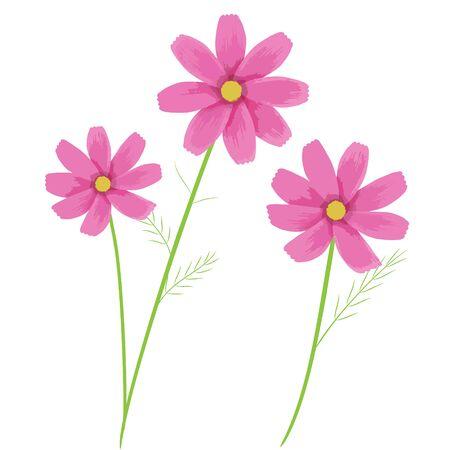 Illustration of pink cosmos flower