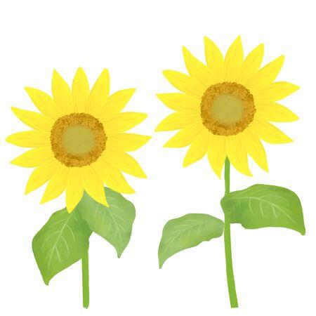 Illustration of two big sunflowers Иллюстрация