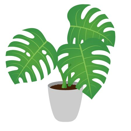 Vector illustration of a potted monstera