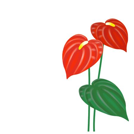 Vector Illustration of Anthurium on a white background